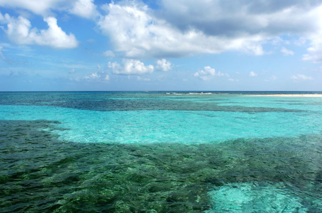Reef in Belize